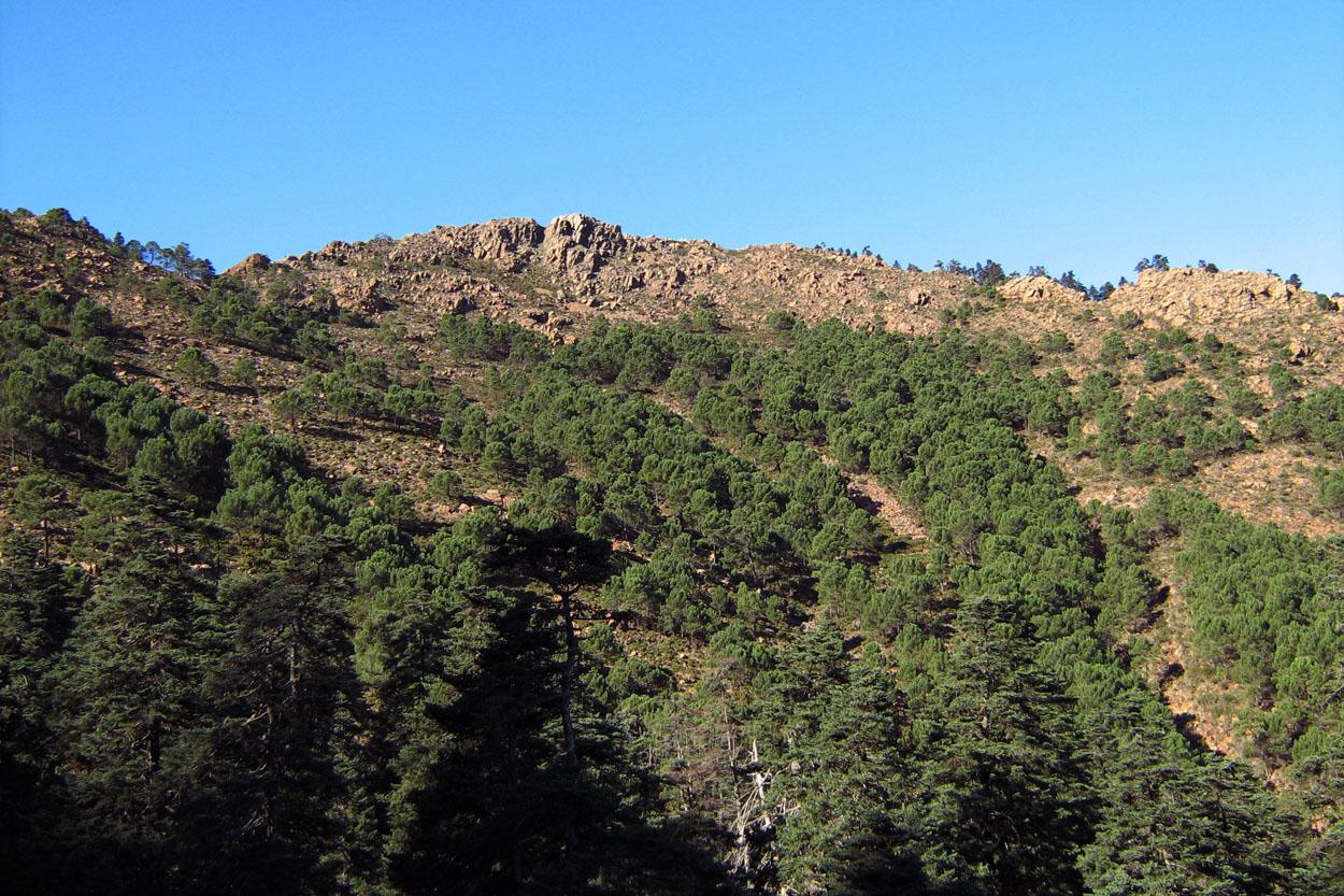 Sendero de los Realillos, hacia el Cerro del Castellón