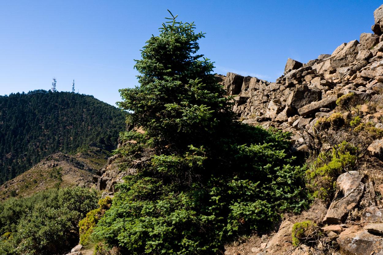 Los Reales, desde el Cerro del Castellón