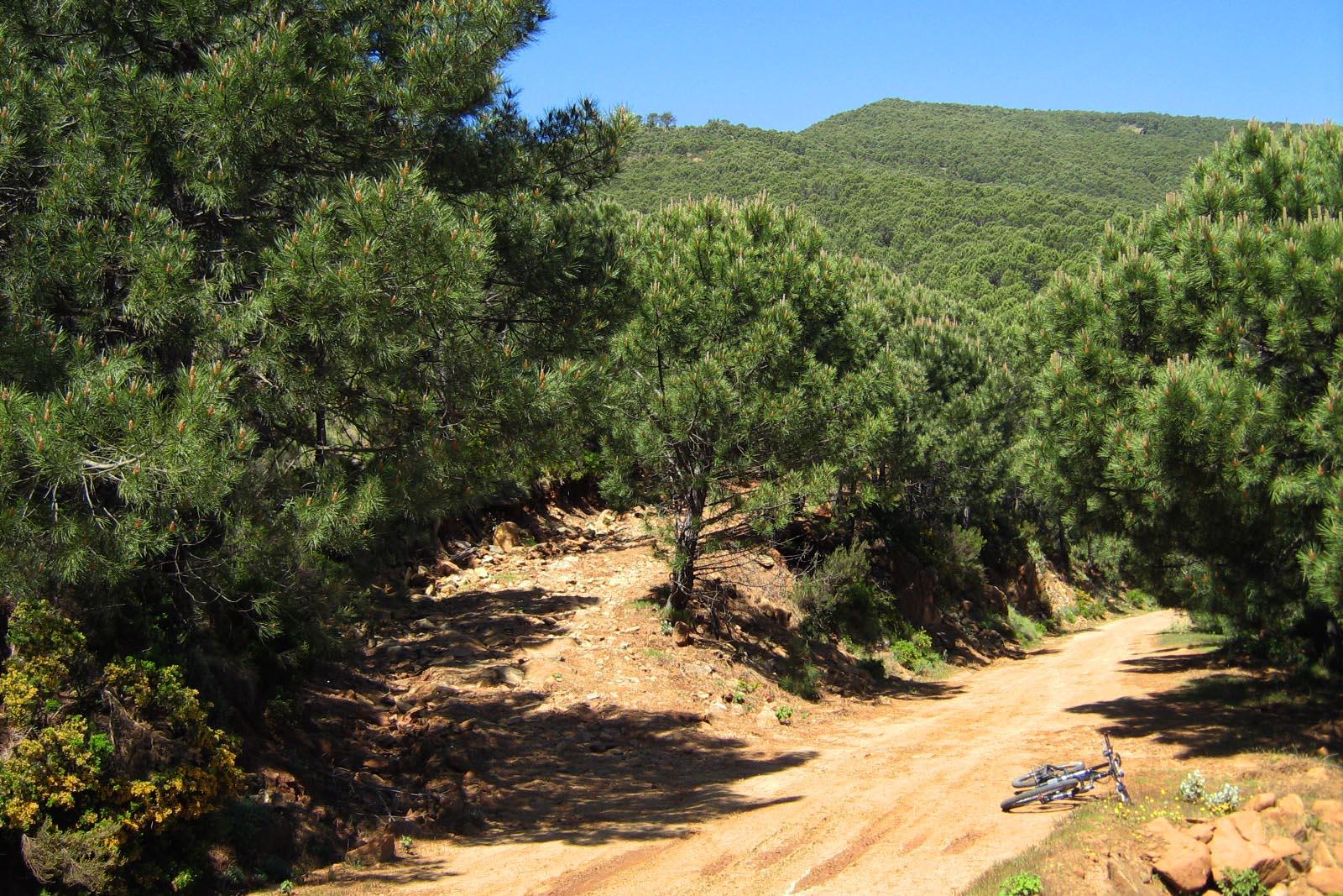 Cruce del Alcornocalillo con el Camino de los Altabacales
