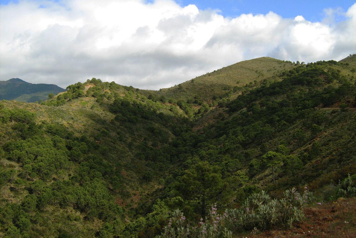 Descenso por el camino de los Altabacales